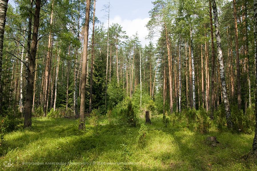 Владимирская область, Лето, поля, леса, грибы, ягоды, сосны, трава