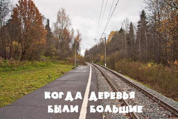 Платформа пост 81 км, Ярославское направление, МЖД, Московская область, Сергиев Посад, БМО