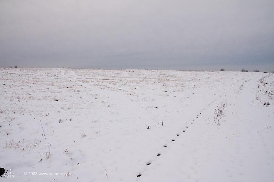 Следы зверя на первом снегу