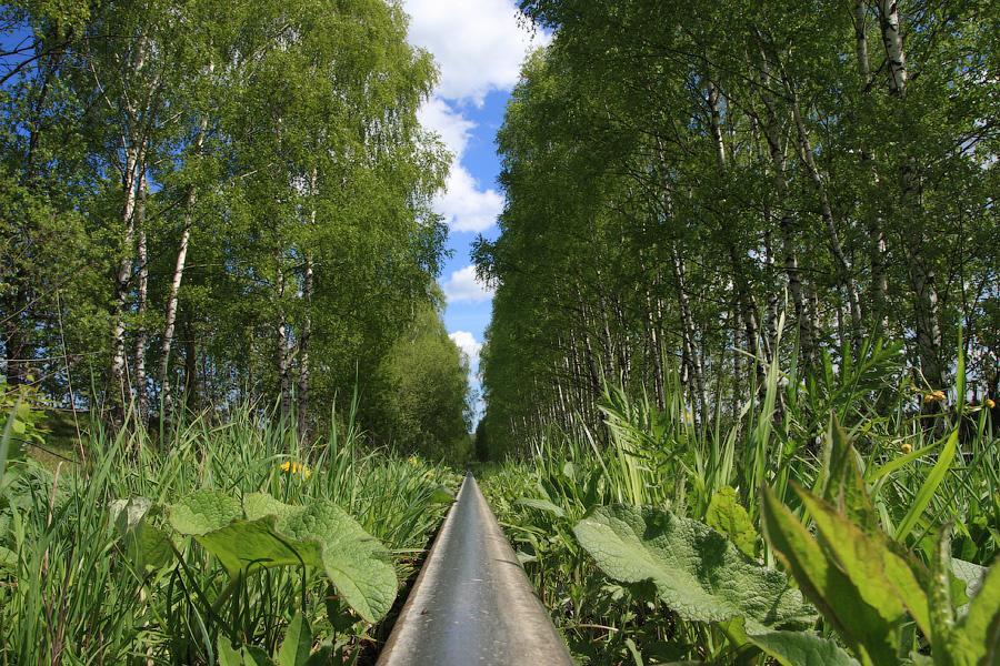 Весна на железной дороге, рельс и цветы