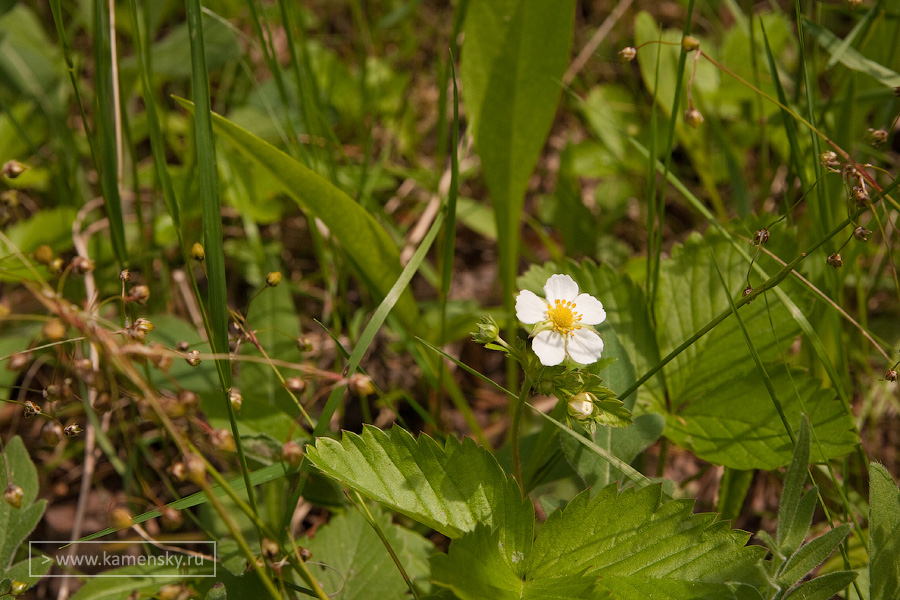 Ранние летние цветы