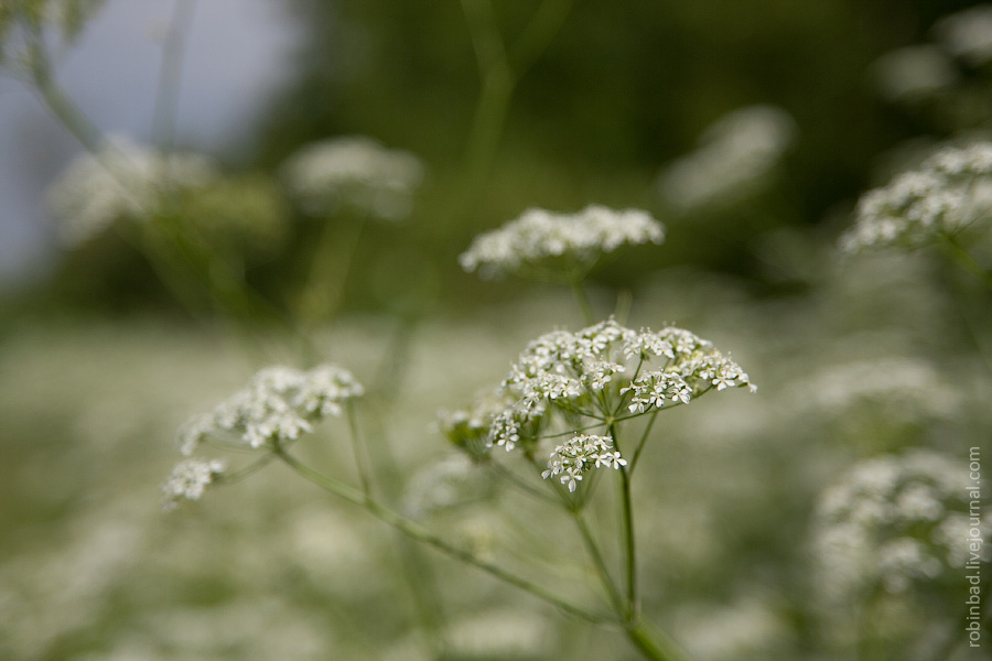 Природа, Сергиевопосадский район