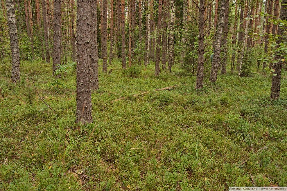 Пейзаж, природа, Ярославская область, Борисоглебский район