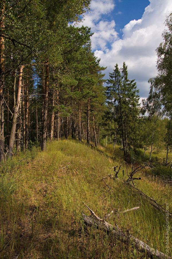 Московская область, Владимирская область, река Мелёжа, природа, лето