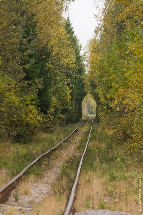 Ногинское ППЖТ в окрестностях Черноголовки, туннель из деревьев