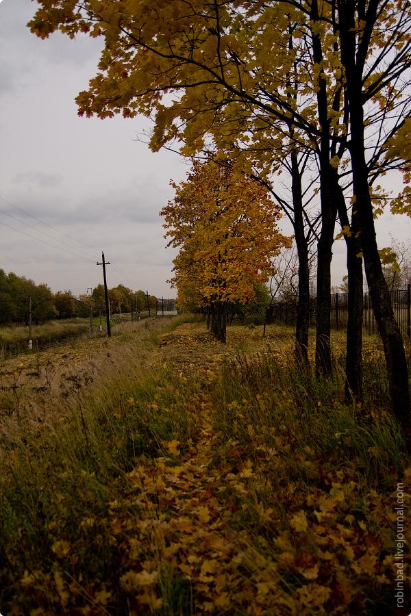 Московская область природа осень