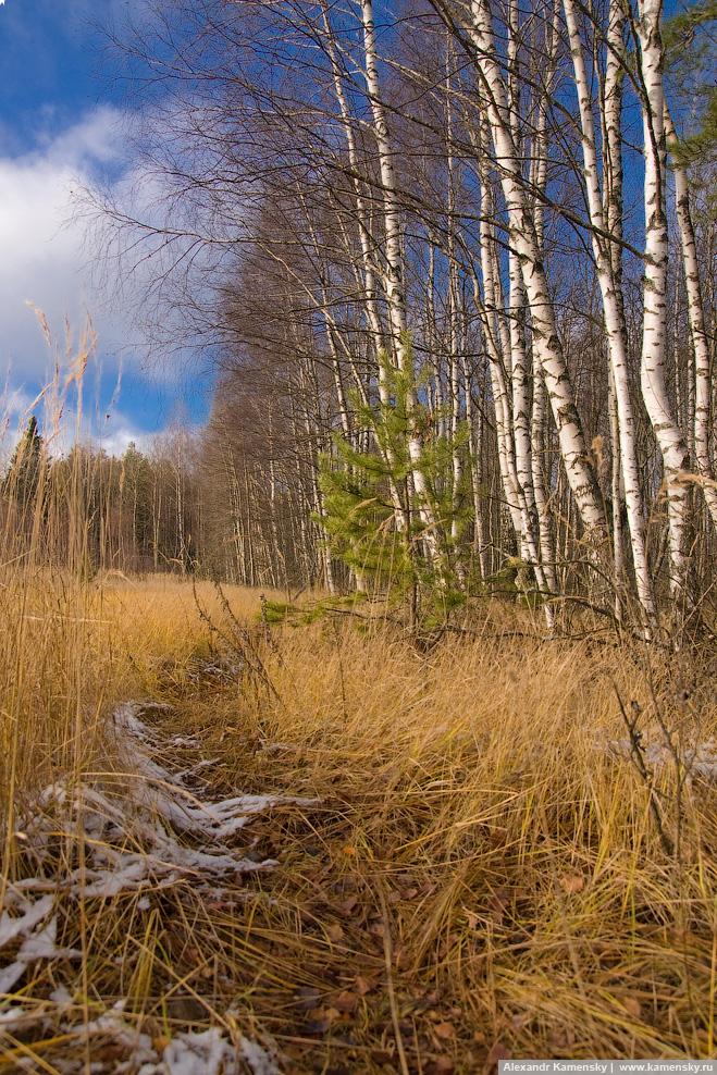 Владимирская область, Киржачский район, поздняя осень