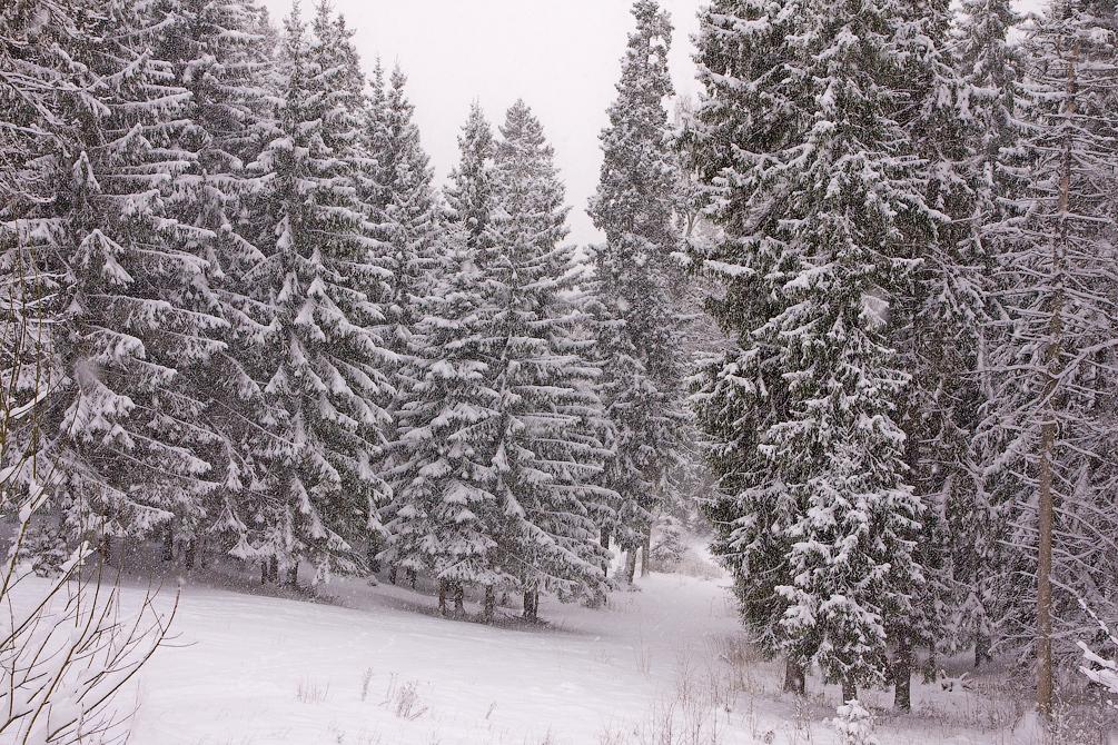 Московская область, зима, снегопад, Красноармейск