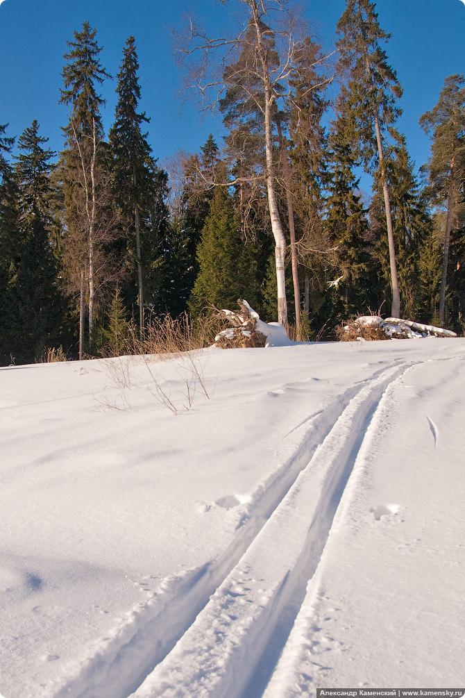Московская область, природа, зима, следы на снегу