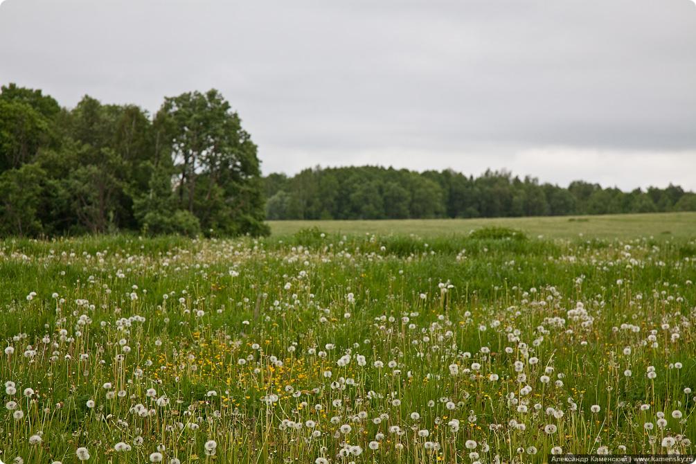 Природа Подмосковья, пейзажная фотография, летний пейзаж