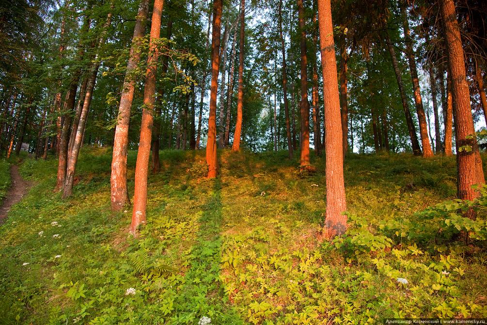 Янтарный закат, Подмосковный лес, Красноармейские пейзажи