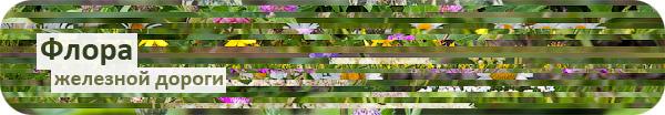 Травы на железной дороге, растения железных дорог, что растет на железнодорожной насыпи