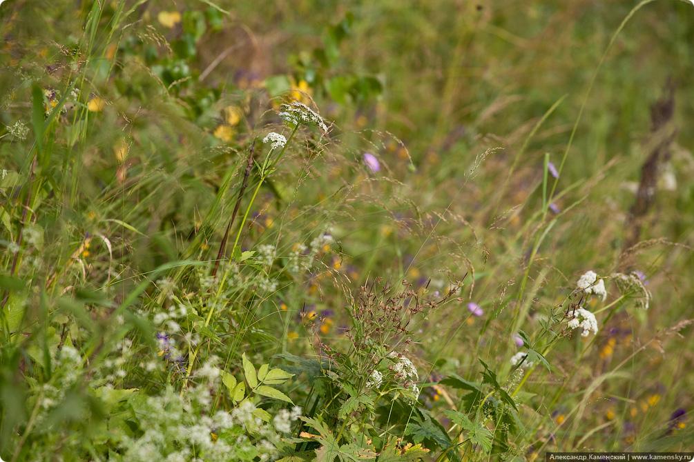 Травы на желеной дороге, растения железных дорог, что растет на железнодорожной насыпи