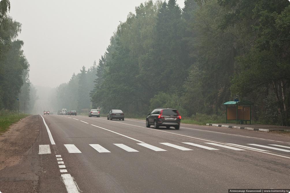 Лето, дым, лес