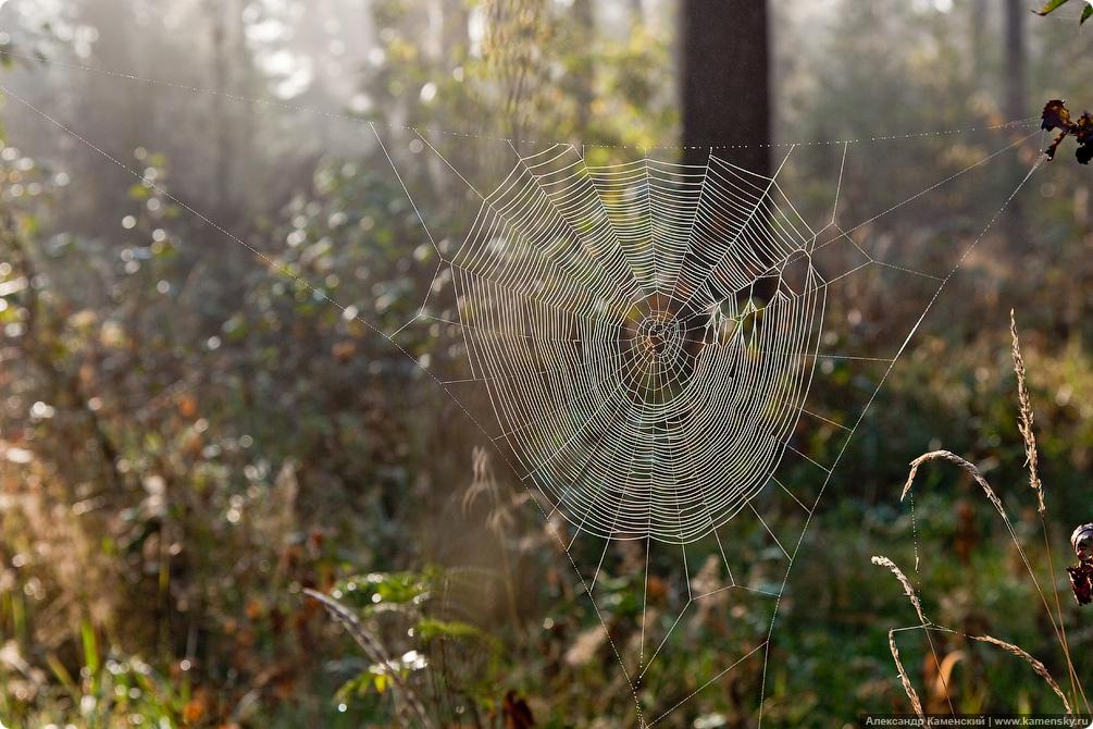 Осень, пейзаж, туман, паутина, роса на паутине, утренник