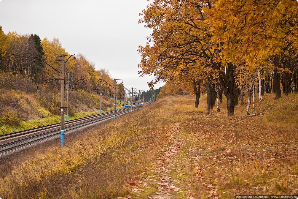 Осень, электричка, Семхоз, желтые листья, дубрава
