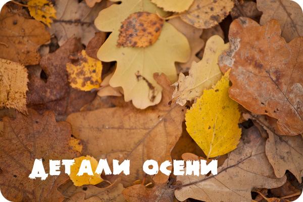 Подмосковная природа в разгар осени. Акценты.