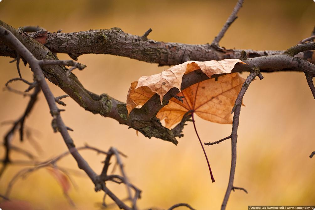 Осень, электричка, Семхоз, желтые листья, дубрава, ЭД4М-0269, ЭД4М, 269