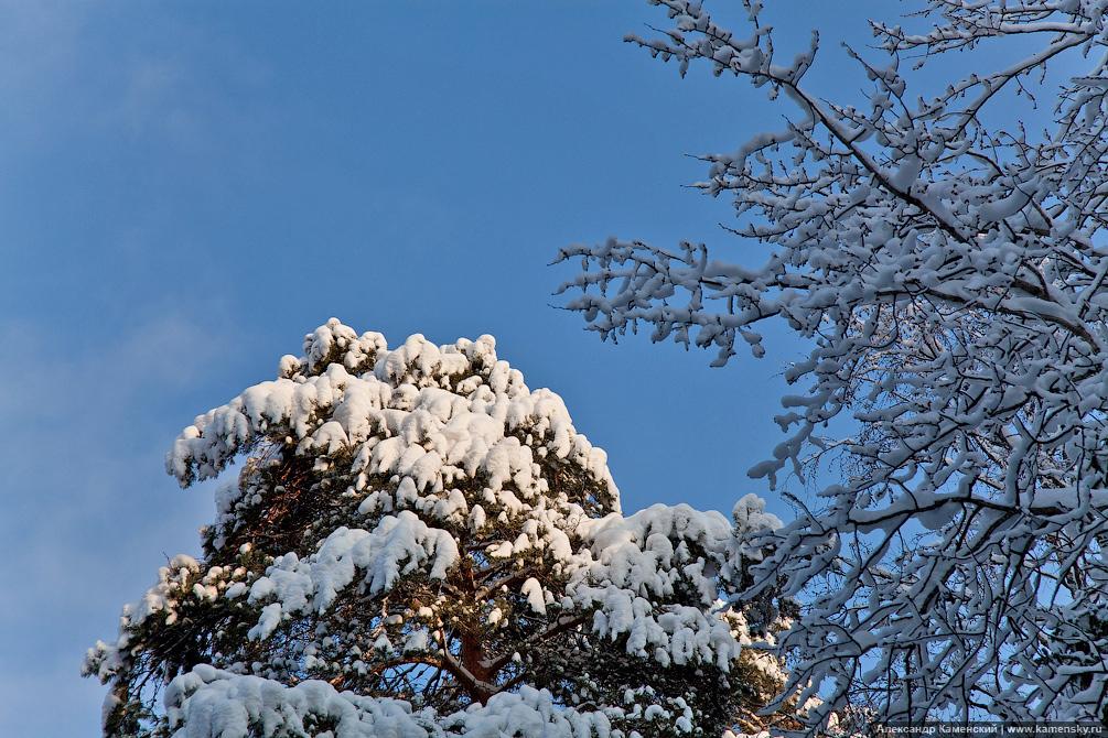 Зимний пейзаж, Ярославское направление, Фотографии электричек и поездов зимой