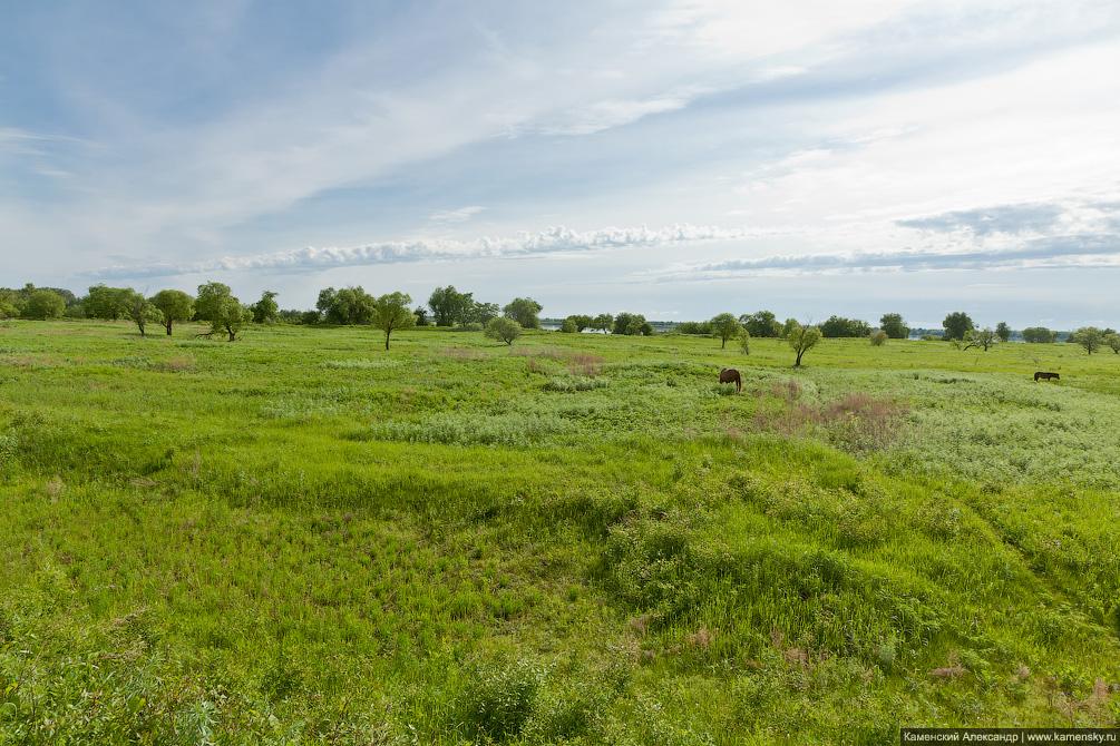 Амурская область, Призейская, Белогорье, пойменные луга, Забайкальская железная дорога