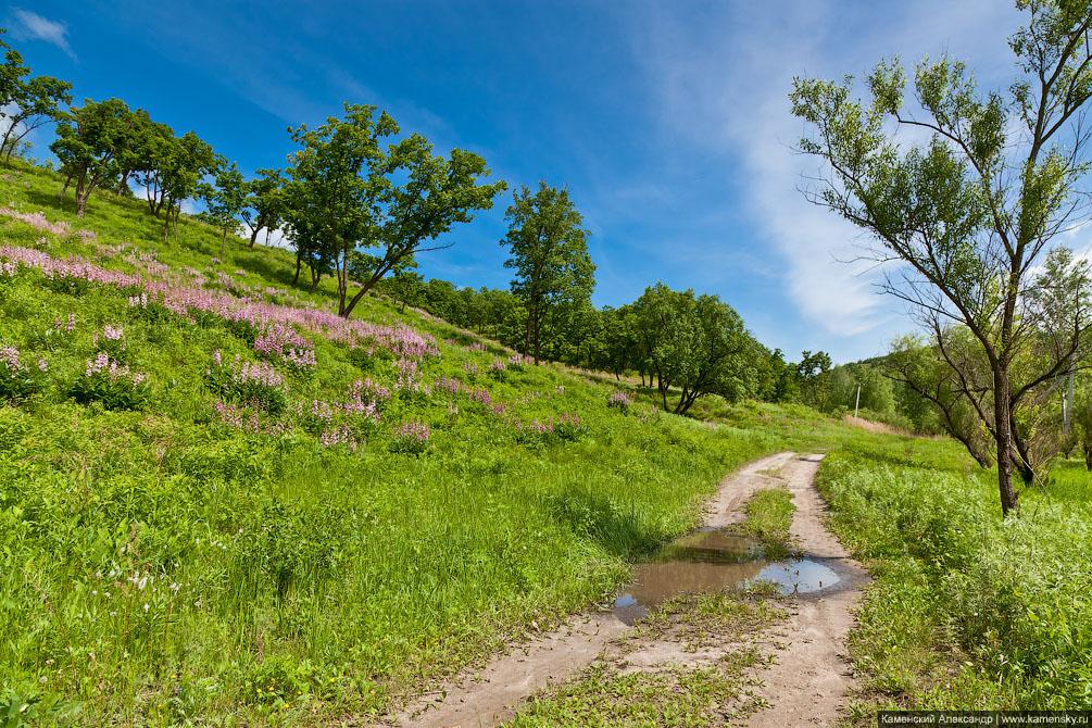 Амурская область, ветка на Благовещенск, Забайкальская железная дорога, пойменные луга река Зея, сопки