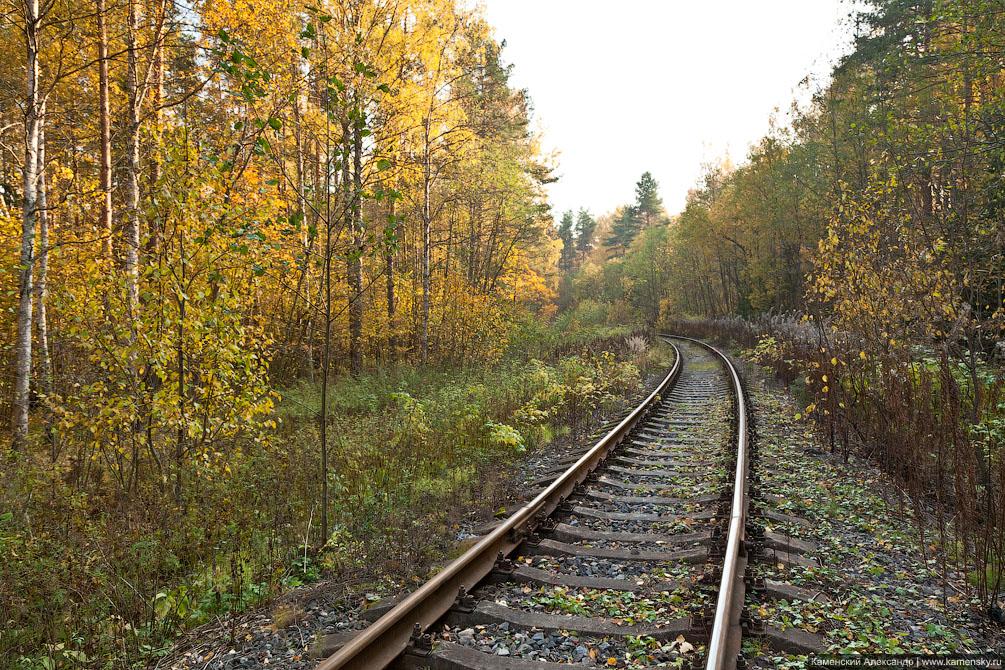 Осенние железнодорожности, Московская область, Осень