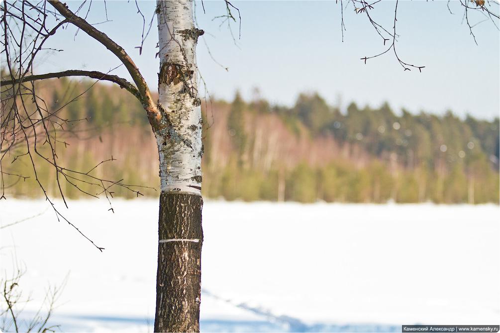 Весна, лес, март