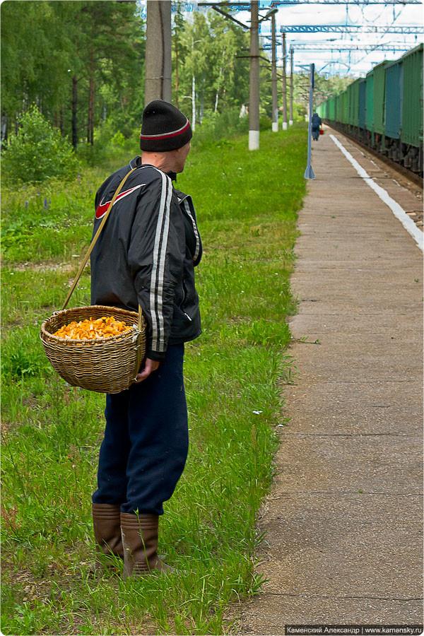 БМО, лето, Илейкино, васильки, ромашки, зверобой