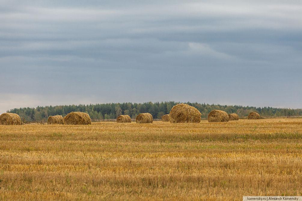 осень, пейзаж, Воскресенск, Егорьевск, железная дорога, Московская область, озеро, деревья, отражения в воде