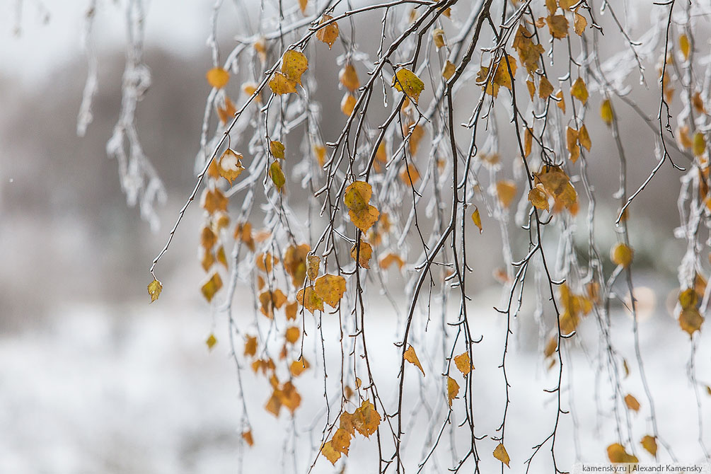 Московская область, осень, ледяной дождь