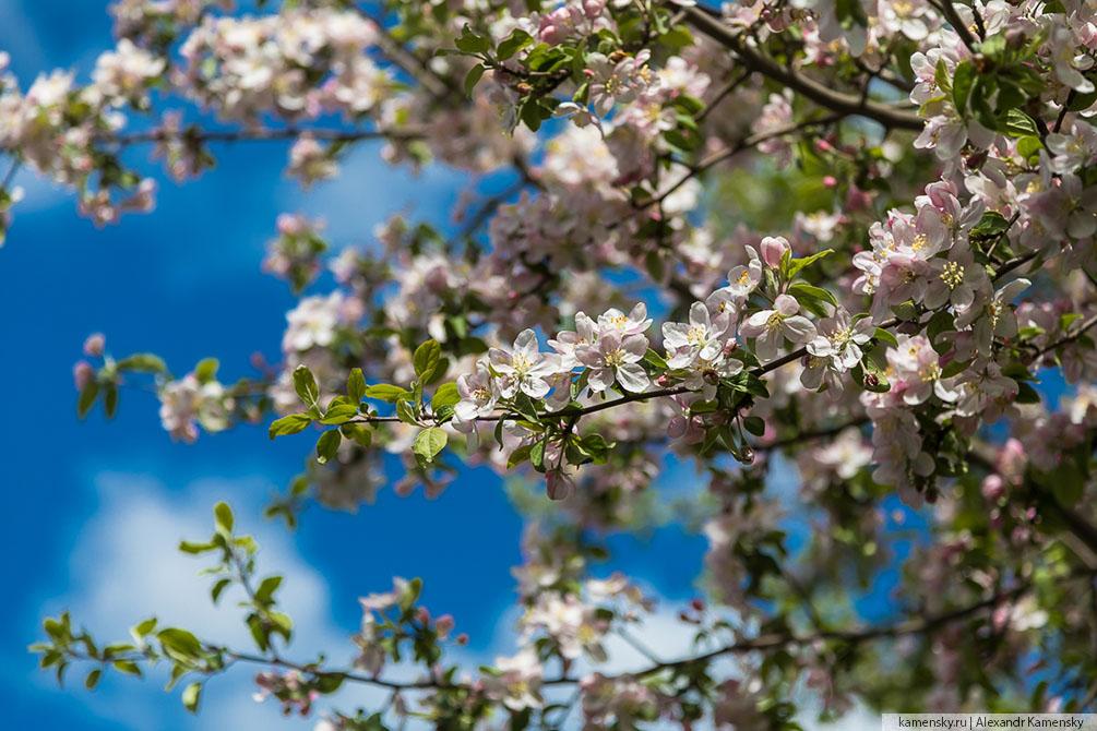 Московская область, весна, цветы, красиво
