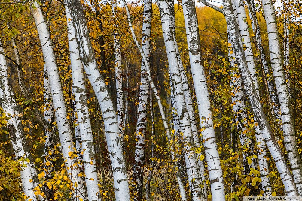 Московская область, осень, природа, пейзаж, холмы, золотая осень, желтая листва