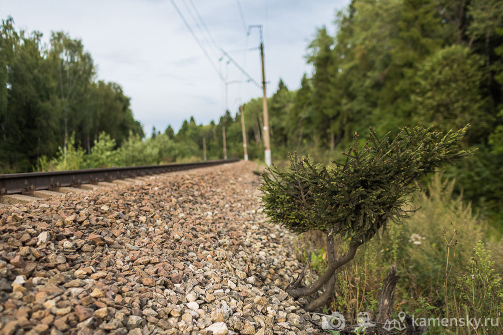 Московская область, БМО, железная дорога, лето