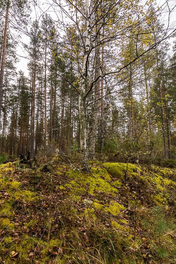 Тверская область, Куженкино, паровоз, осень, хорошо