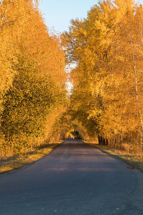 Рязанская область, осень, пейзаж