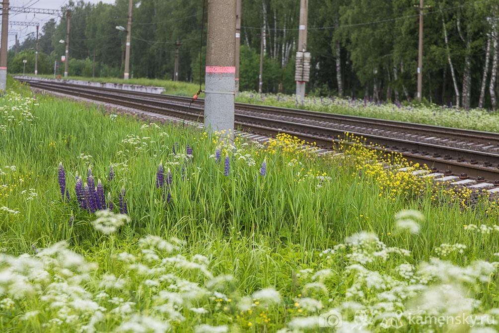 Московская область, Владимирская область, БМО, весна